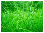 herbe.jpg